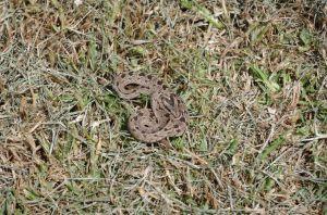Schlangen in Malealea