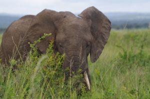 Elefanten im Mikumi