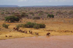 Wunderschöne Wasserstelle mit vielen Elefanten